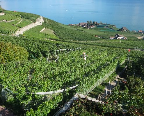 yvoire vigne AAZ TAXI ANNECY